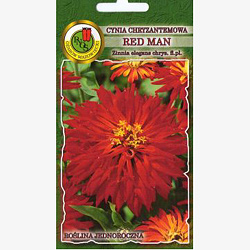 Cynia chryzantemowa RED MAN 1 gram