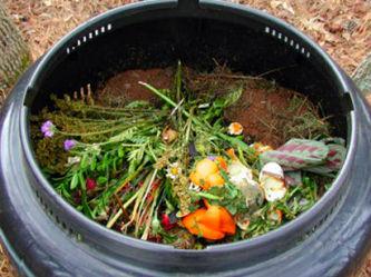 Zimne wyciągi wodne, napary i gnojówki roślinne